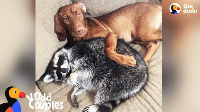 Adorable Animals: June And Waffles
