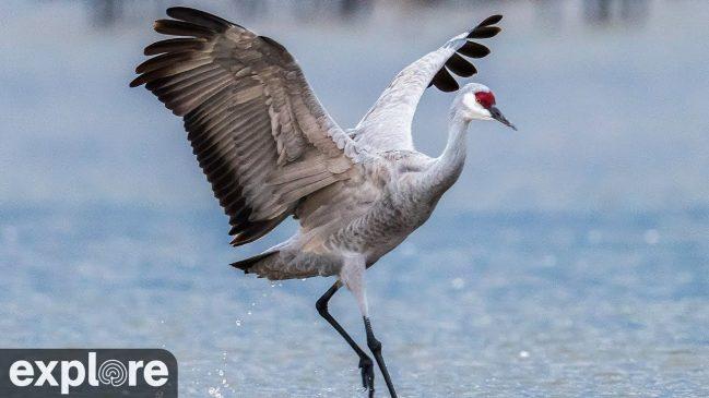 Audubon's Rowe Sanctuary – Explore.org LIVECAM