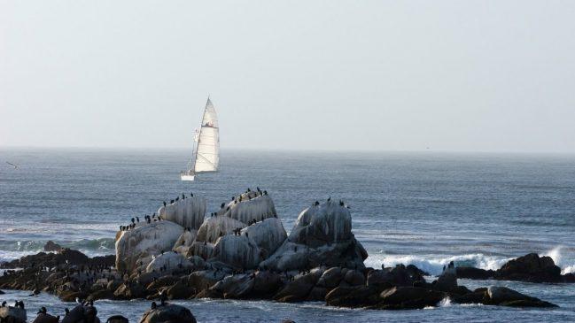 Monterey Bay Nature Cam – Explore.org LIVECAM