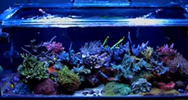 Salt Water Aquarium by Reefbum