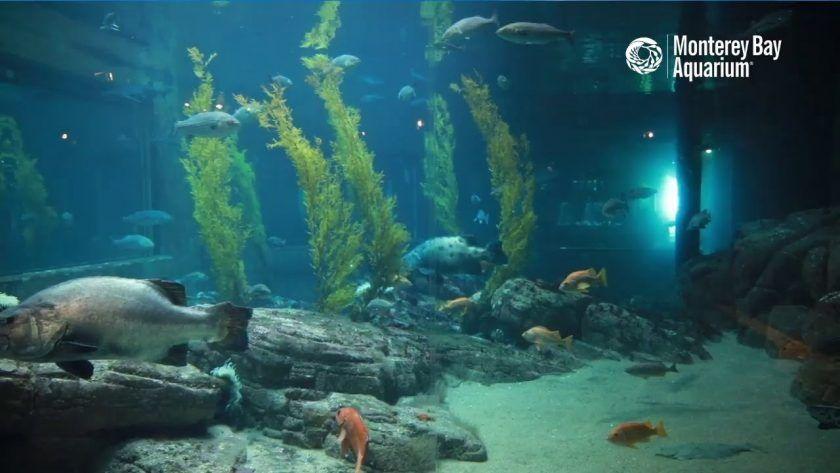 Monterrey Bay Shark Cam