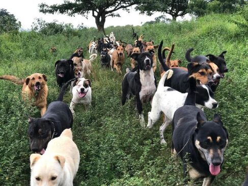 The Land of a Thousand Stray Dogs