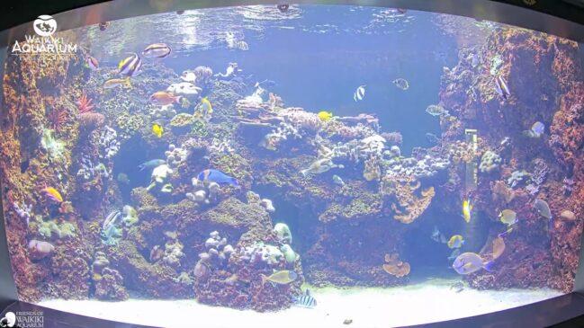 Northwestern Hawaiian Islands Exhibit in Waikiki Aquarium
