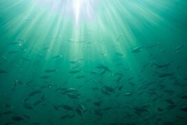 Underwater View of Anacapa Island in the Channel Islands National Park