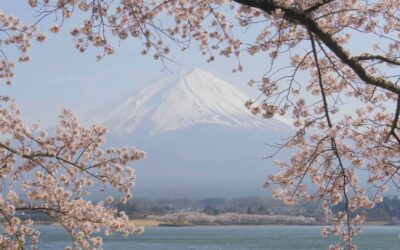 Cherry Blossoms at Mount Fiji