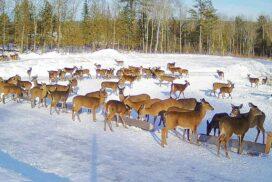 Brownville Food Pantry For Deer