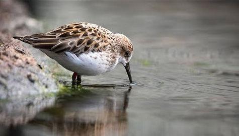 Monterrey Bay Aviary Cam – Explore.org LIVECAM
