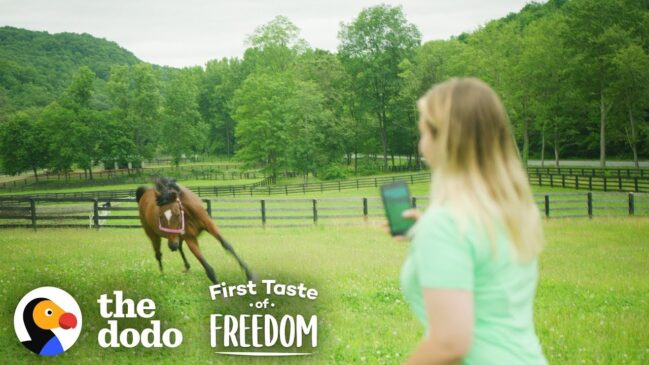 Adorable Animals: First Taste of Freedom -Starving Horse Becomes Gorgeous And Happy