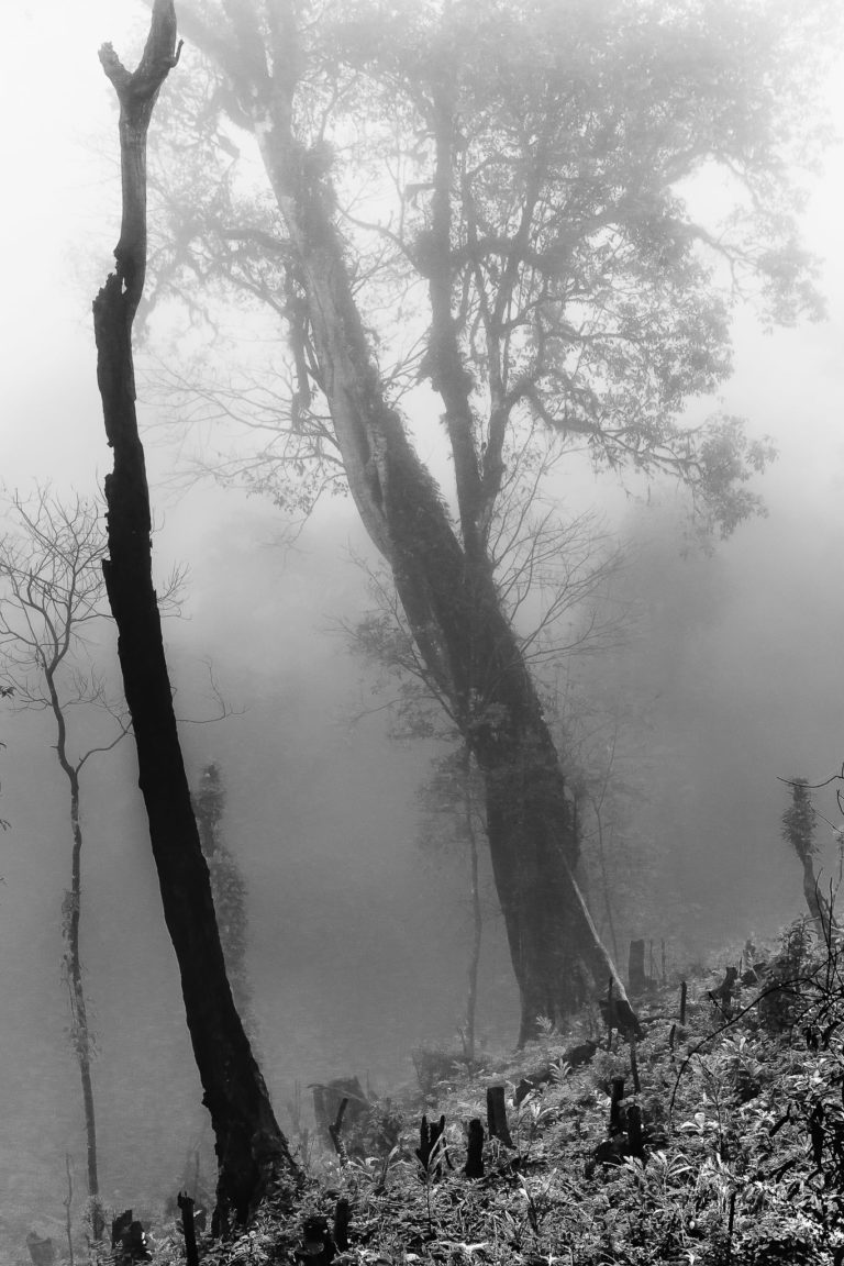 Burned Mountain Forest – Black and White Photograph of Burned Forest Trees in Limited Edition Prints (Canvas/Matte Paper)