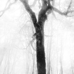Frozen Forest Tree - Limited Edition Prints by Fine Art Nature and Landscape Photographer Minhajul Haque from India