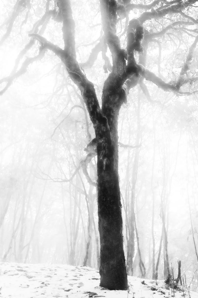 Frozen Forest Tree – Surreal Black and White Limited Edition Photograph of a Lone Tree in an Eerie Atmosphere