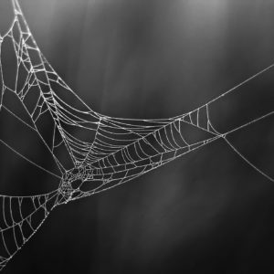 Glowing Cobweb - Minimalistic Intimate Landscape Photograph in Limited Edition Pigment Prints on Canvas and Matte Paper by Minhajul Haque