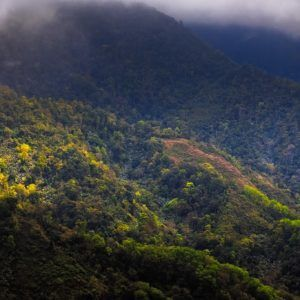 Glowing Mountain Forest - Intimate Landscape Photograph in Limited Edition Pigment Prints on Canvas and Matte Paper by Minhajul Haque