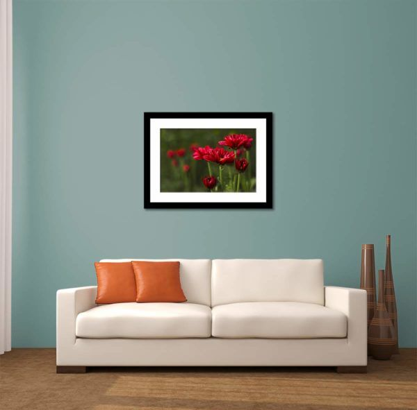 Little Red Flowers - Limited Edition Artwork by Minhajul Haque. A Photography Print Made with Love and Passion to Make You Feel Special and Serene. Here in This Image, It Is an Interior Scene with the Wall Art Print. Buy Limited Edition Pigment Prints of Artistic Nature and Landscape Photos for Your Home and Office Interiors. Bedroom Wall Art, Dining Room Wall Art, Living Room Wall Art, Kitchen Wall Art, Bathroom Wall Art, Kid's Room Wall Art, Office Wall Art, and Sitting Room Wall Art for Sale Online in India