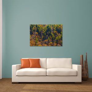 Sunlit Mountain Trees - Limited Edition Artwork by Minhajul Haque. A Photography Print Made with Love and Passion to Make You Feel Special and Serene. Here in This Image, It Is an Interior Scene with the Wall Art Print. Buy Limited Edition Pigment Prints of Artistic Nature and Landscape Photos for Your Home and Office Interiors. Bedroom Wall Art, Dining Room Wall Art, Living Room Wall Art, Kitchen Wall Art, Bathroom Wall Art, Kid's Room Wall Art, Office Wall Art, and Sitting Room Wall Art for Sale Online in India
