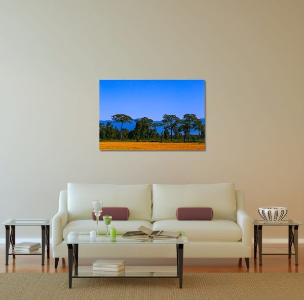 Gold Field - Limited Edition Artwork by Minhajul Haque. A Photography Print Made with Love and Passion to Make You Feel Special and Serene. Here in This Image, It Is an Interior Scene with the Wall Art Print. Buy Limited Edition Pigment Prints of Artistic Nature and Landscape Photos for Your Home and Office Interiors. Bedroom Wall Art, Dining Room Wall Art, Living Room Wall Art, Kitchen Wall Art, Bathroom Wall Art, Kid's Room Wall Art, Office Wall Art, and Sitting Room Wall Art for Sale Online in India