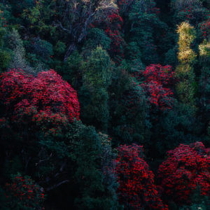 Positive Vibes - A Fine Art Photography of a Colorful Forest in India by Alakesh Ghosh