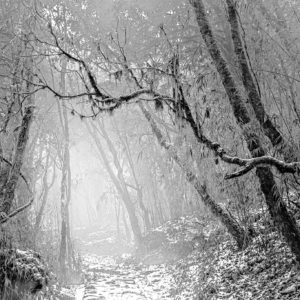 Snowy Dhotrey Forest - Intimate Black and White Landscape Photograph in Limited Edition Pigment Prints by Minhajul Haque