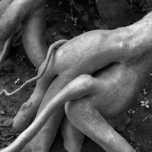 Erotic Roots - Artwork