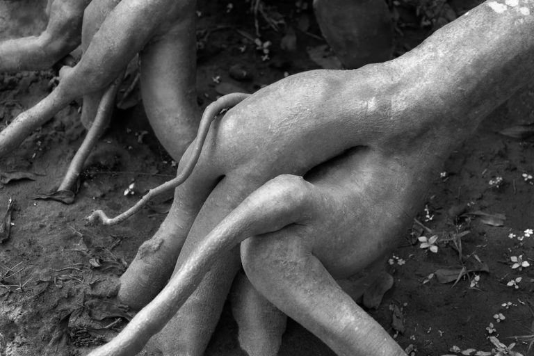 Erotic Roots – Black and White Photography of Nude Roots in Limited Edition Prints (Canvas/Matte Paper)