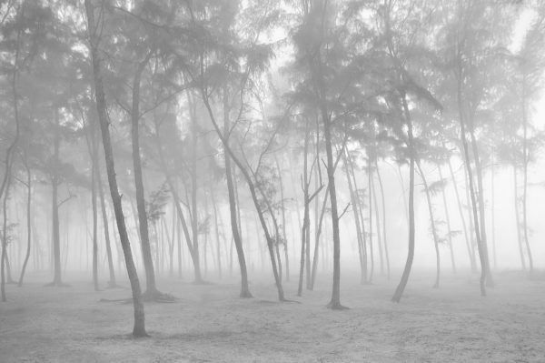 Mystic Wood - Limited Edition Black and White Photography Artwork by Sahidul Haque