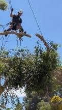 Tree Surgeons & Arborists In Willetton - Cape Tree Service