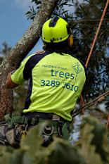 North Brisbane Trees Logo