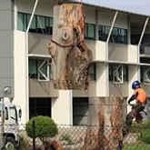 Assurance Trees Logo