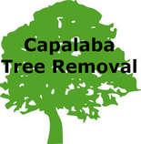Tree Surgeons & Arborists In Capalaba - Capalaba Tree Removal
