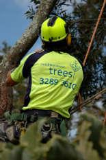 Tree Surgeons & Arborists In Yugar - North Brisbane Trees