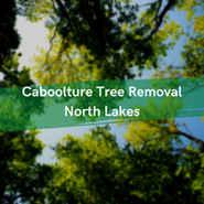 Caboolture Tree Removal Tree Surgeons & Arborists