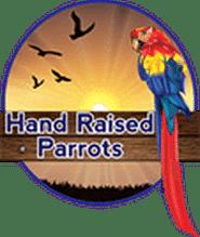 Hand Raised Parrots Pet Shops