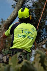North Brisbane Trees Tree Surgeons & Arborists