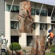 Assurance Trees Tree Surgeons & Arborists