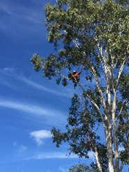 Tree Surgeons & Arborists in Jones Hill, Queensland Australia