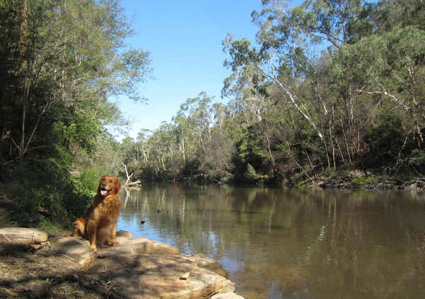 Dogdayz Country Clubs - Pet Groomers In Warrandyte 3113