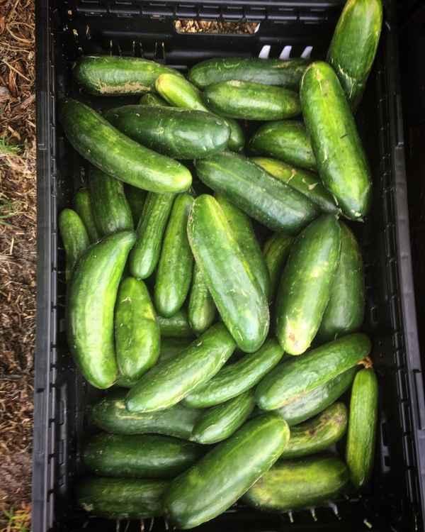 Food For Change - Agriculture In Sandringham 3191