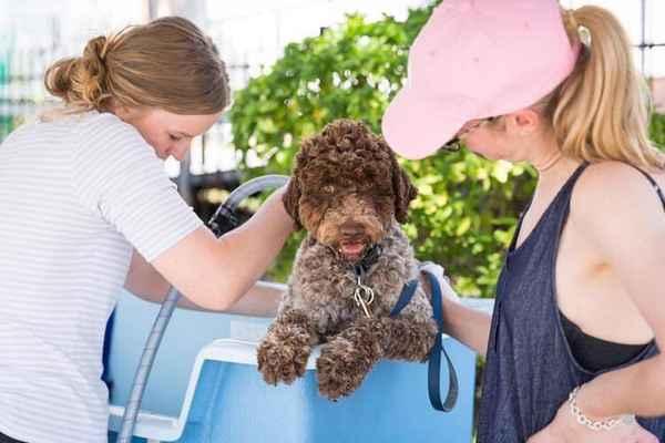 Ashgrove Avenue Veterinary Clinic - Veterinarians In Ashgrove 4060