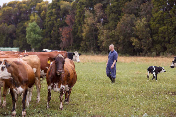 The Organic Milk Company - Dairy Products In Port Melbourne 3207