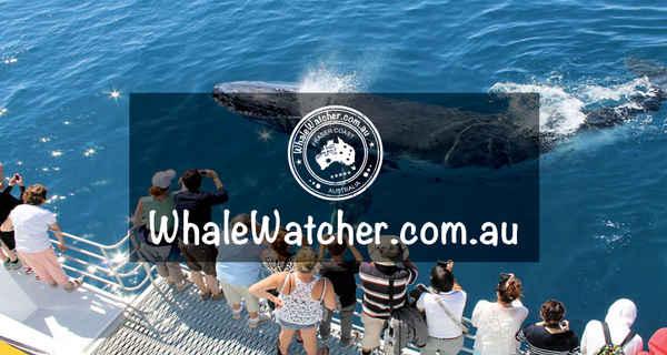 WhaleWatcher.com.au - Travel & Tourism In Torquay 4655