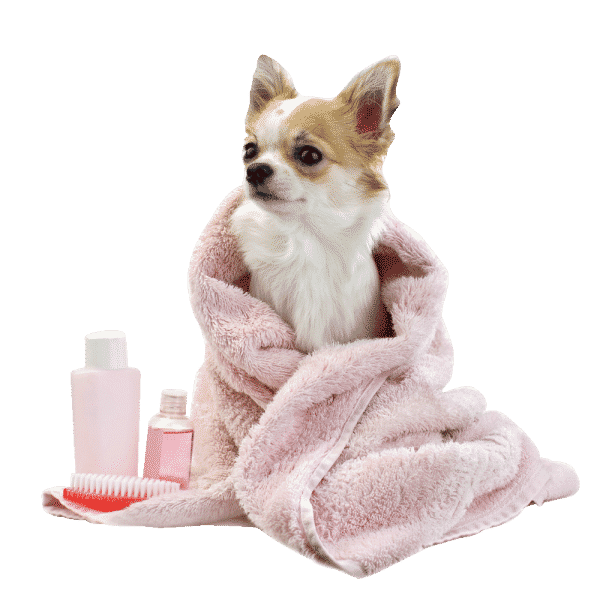 Photo for K9 Sparkling Dog Wash- Pet Groomers in Point Cook 3030 , Victoria
