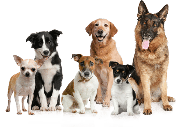 K9 Sparkling Dog Wash - Pet Groomers In Point Cook 3030