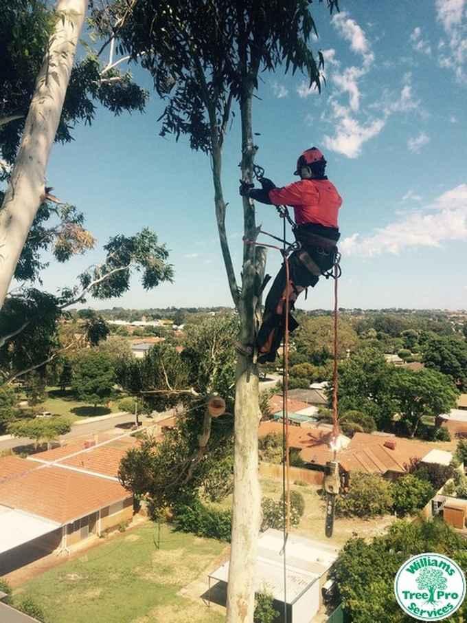 Photo for Williams Tree Pro Services- Tree Surgeons & Arborists in Banjup 6164 , Western Australia