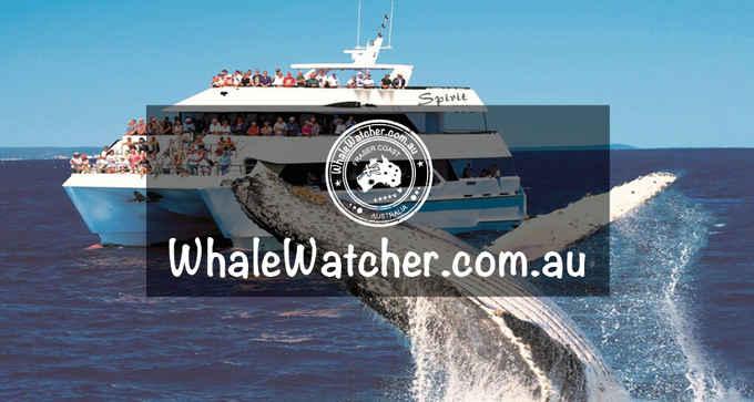 Photo for WhaleWatcher.com.au- Travel & Tourism in Torquay 4655 , Queensland