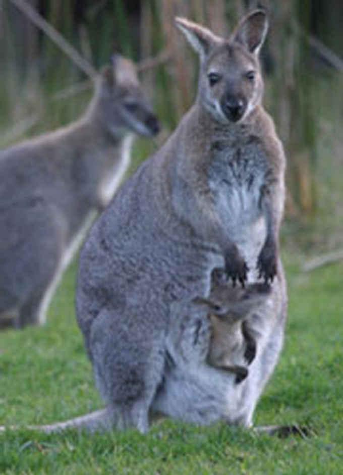 Photo for King Island Tours- Tours in Grassy 7256 , Tasmania