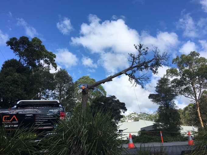 Photo for Coastal Arbor Pty Ltd- Tree Surgeons & Arborists in Terrigal 2260 , New South Wales