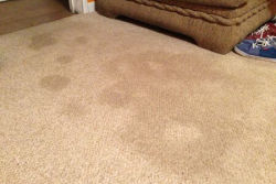 6 Signs That Indicate You Have To Replace Your Office Carpets Immediately