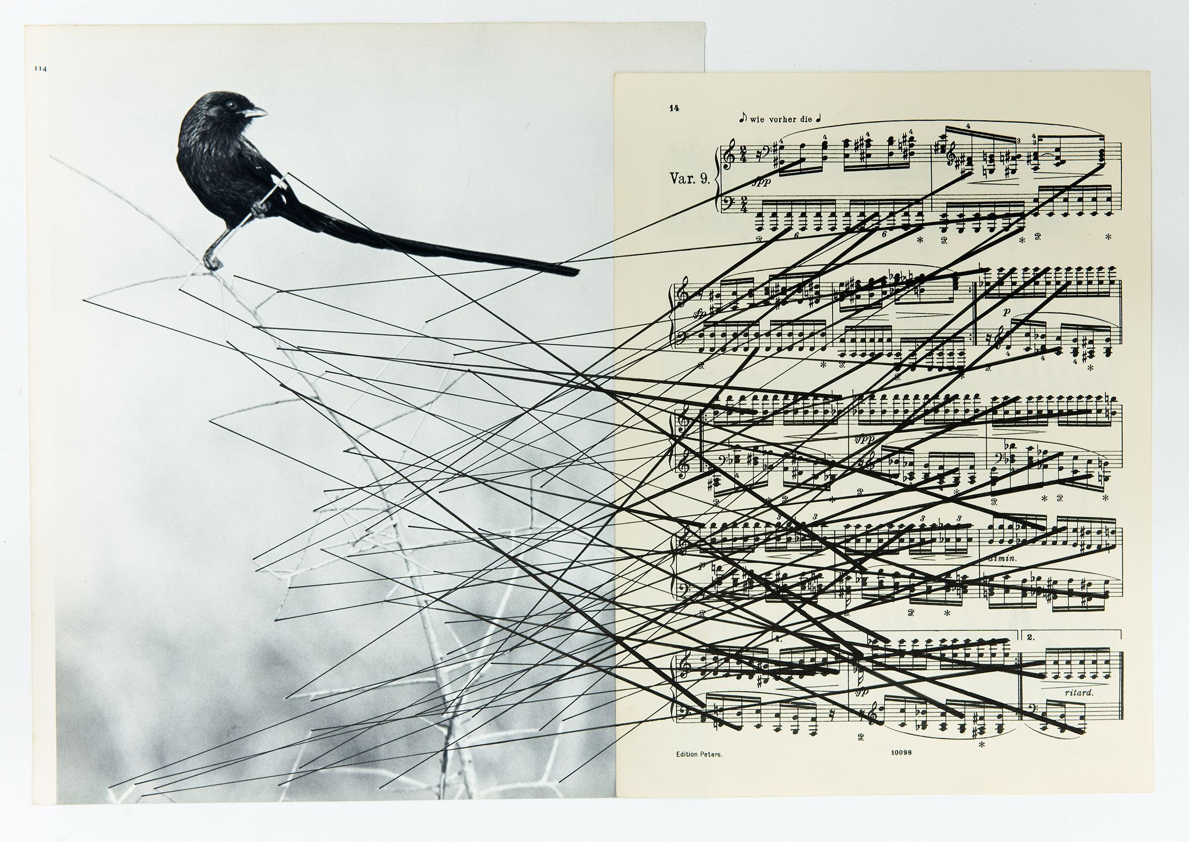 Bird, 2014, Sheet music paper,found photograph, ink