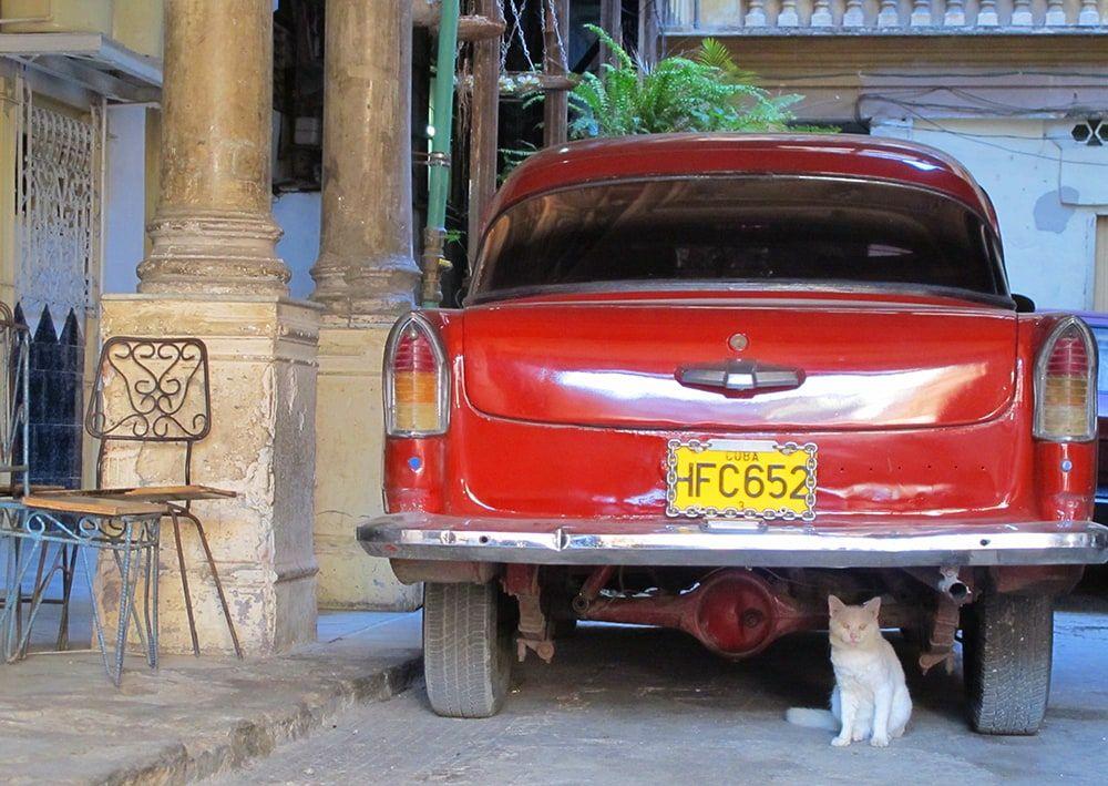 Lloyd Frost Photographer - La Guarida Cat