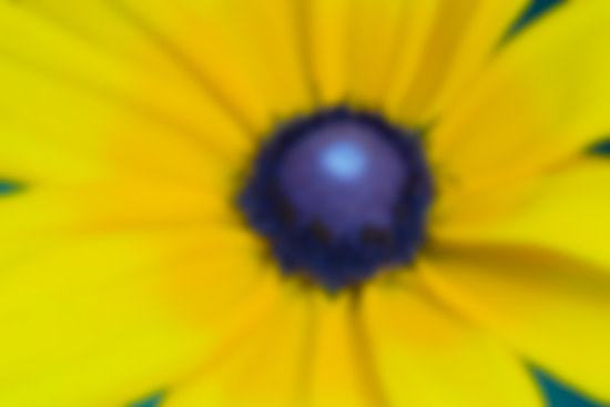 Figure 4 - Guassian Blur Applied to Black Eyed Susan Image